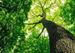 Why hemp is better than trees?
