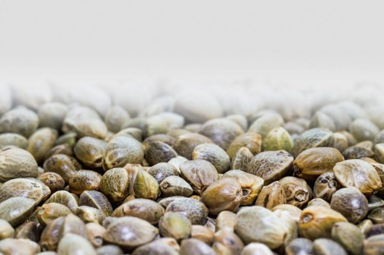 How to Identify the Best Hemp Seeds for Your Diet