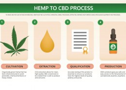 How to make hemp oil?