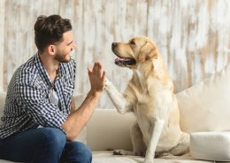 How much hemp oil should I give my dog?