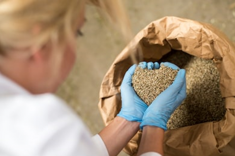Top 10 Uses of Hemp Seeds Now Listed as a Superfood
