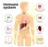 Use of hemp seeds to promote a healthy immune system