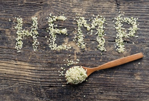 Food is a major use of hemp seeds - hemp seeds on bench and in spoon