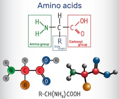 Hemp seeds are loaded with amino acids - image of amino acid structure