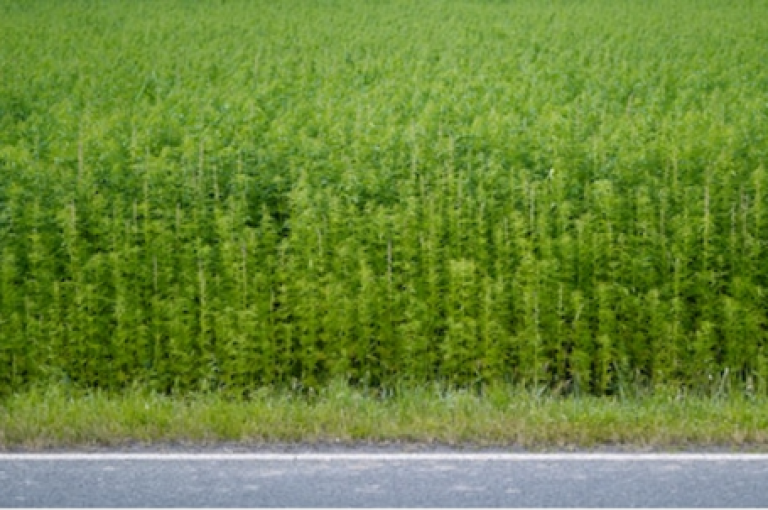Top 5 Questions About Industrial Hemp