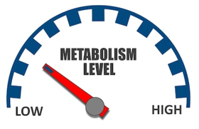 Hemp seeds boost metabolism - image of metabolism level gauge