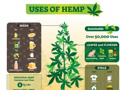 What can you make with hemp?