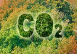 How much co2 does hemp absorb compared to trees?