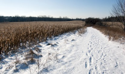 Can hemp tolerate cold weather?