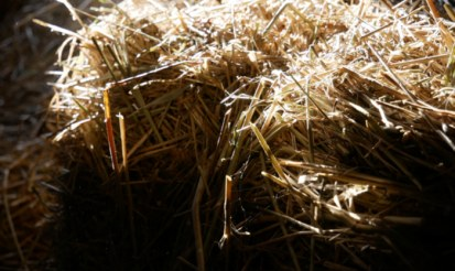 Is hemp bedding safe to use for my pets?