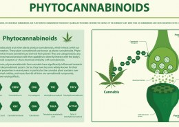 I keep hearing about phytocannabinoid rich hemp oil,what is it?