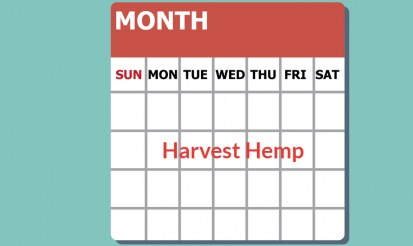 What month is hemp harvested?