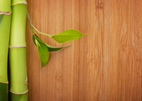 Bamboo or Hempcrete for flooring?