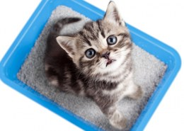 How well does hemp cat litter work?