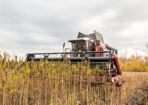 How to find the best cbd hemp harvesting equipment?