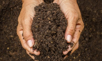 What's the best soil to grow hemp?
