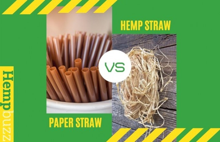 Hemp Vs. Paper Straws: How to Make Hemp Straws At Home?