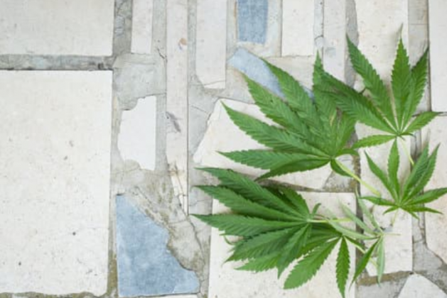 All You Need to Know about Hempcrete Flooring