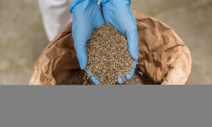 How to Grow Sterilized Hemp Seeds
